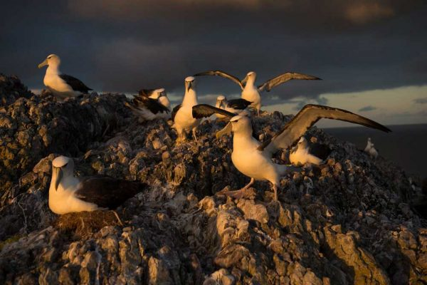 Albatross_Island_Print_001