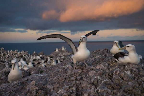 Albatross_Island_Print_002