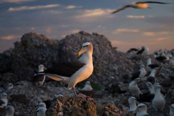 Albatross_Island_Print_004