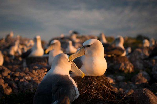 Albatross_Island_Print_005