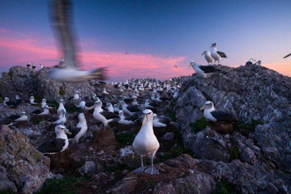 Albatross_Island_Print_006