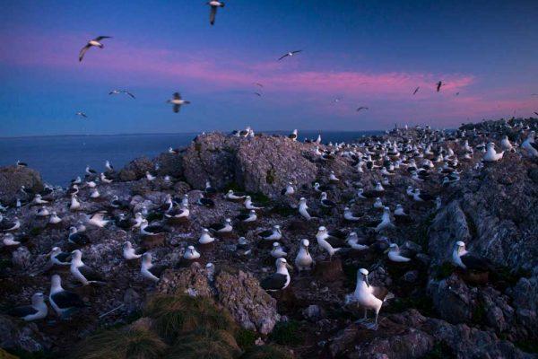 Albatross_Island_Print_007