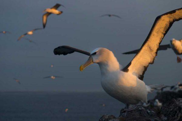 Albatross_Island_Print_009