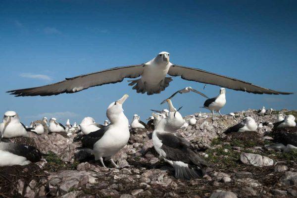 Albatross_Island_Print_010