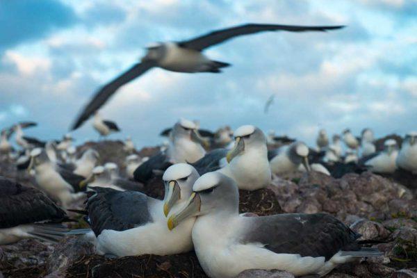 Albatross_Island_Print_011